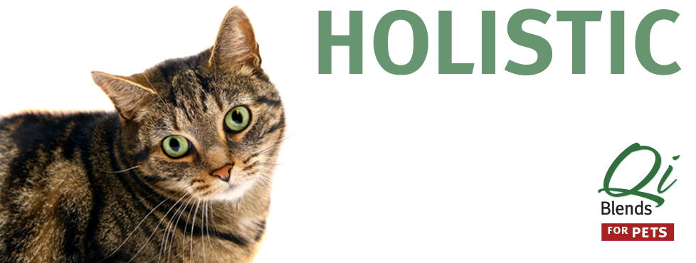 Qi Blends home slide - Holistic